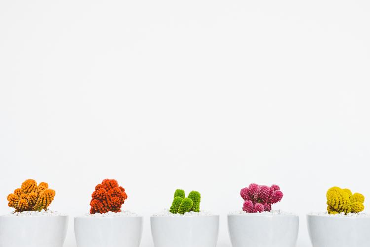 3 Plants Growing
